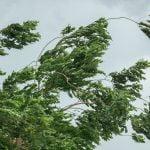 Jak pomóc klientowi w zarządzaniu wiatrem?